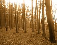 Podzim v lese II