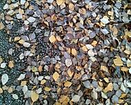 Farby jesene ( Barvy podzimu )