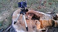 Nikon v lese