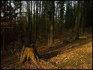 Březnový les