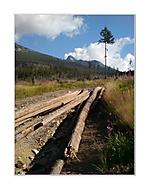 O dreve a Lomnickom štíte v pozadí