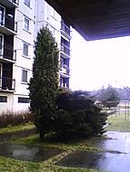 Stromokeř