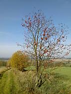 Podzim na jihozápadě...