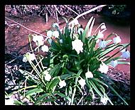 Jaro přišlo