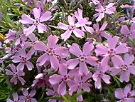 kytky na zahrádce