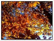 Zářivý podzim.