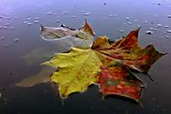 Podzimní rozloučení.