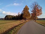 ....cesta podzimní...