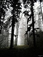 Podzimní procházka 2