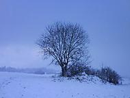 Prvy sneh 2008 v Dolnom kubine...