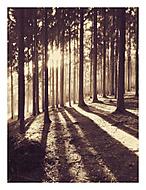 V lese řáholci