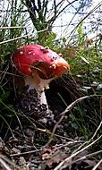 houbov_
