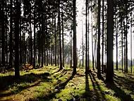 Dubnové odpoledne v lese