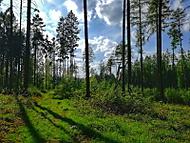 Duben v lese