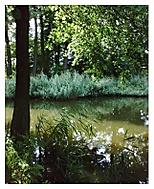 Rákosníčkův rybníček