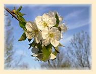 konecne jaro