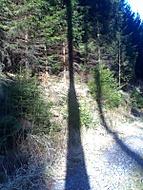 hra světel a stínů v lese...