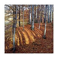 Brouzdání lesem II
