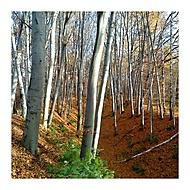 Brouzdání lesem
