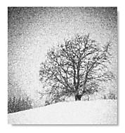 Památný strom - Vráblovy paseky, Lužná u Vsetína