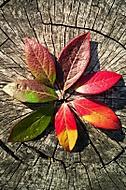 Květ podzimu.