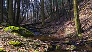 Plešický potok.