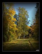 Z podzimního parku