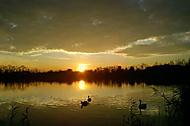 Podvečer na polaneckém rybníku