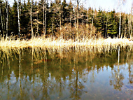 břeh rybníku Čermáka :-)