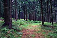 V lese se to zelení