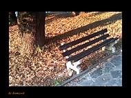 Opustená na jeseň ...