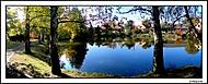 zátiší u rybníka (tomason.) – Sony Ericsson K800i