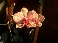 Makro kytky