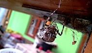 Fůůůůj pavouk