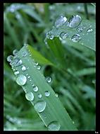 Po dešti...