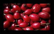 Fructus cynosbati