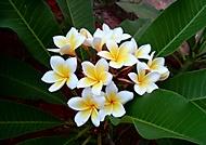 Nejaké kvety na Kréte