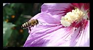 Hurá na nektar