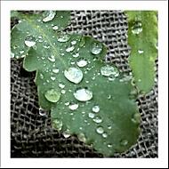 Po dešti..
