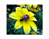 Brouček a jeho květina