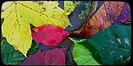 Pocta padlým listům
