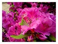 Kvetoucí krása