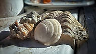 Mušle z Hurghady