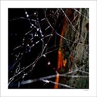 Avangarda z pavúčieho sveta.