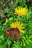Motýl z Beskyd