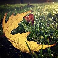 Podzimní ráno na zahradě