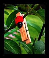 Dřevohmyz