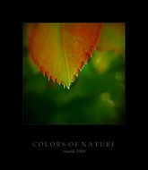 Barvy přírody