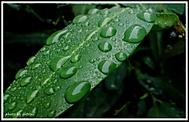 Po dešti II.
