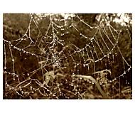 Kvapky na pavučine